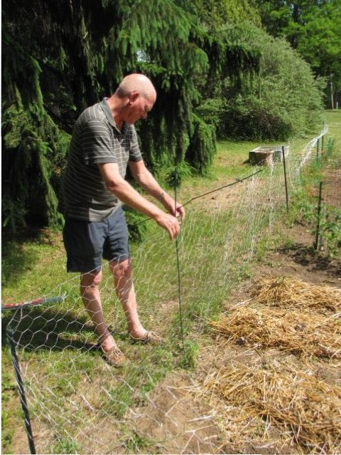 chicken wire garden fence