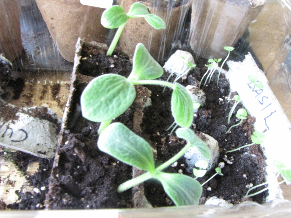 how to grow butternut squash in a container