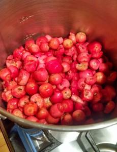 Crab Apples - in pot