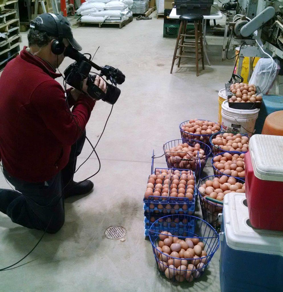 Eggs at Maple Wind Farm
