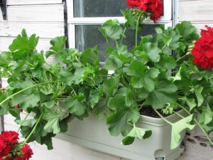 hanging baskets planters and flower window boxes