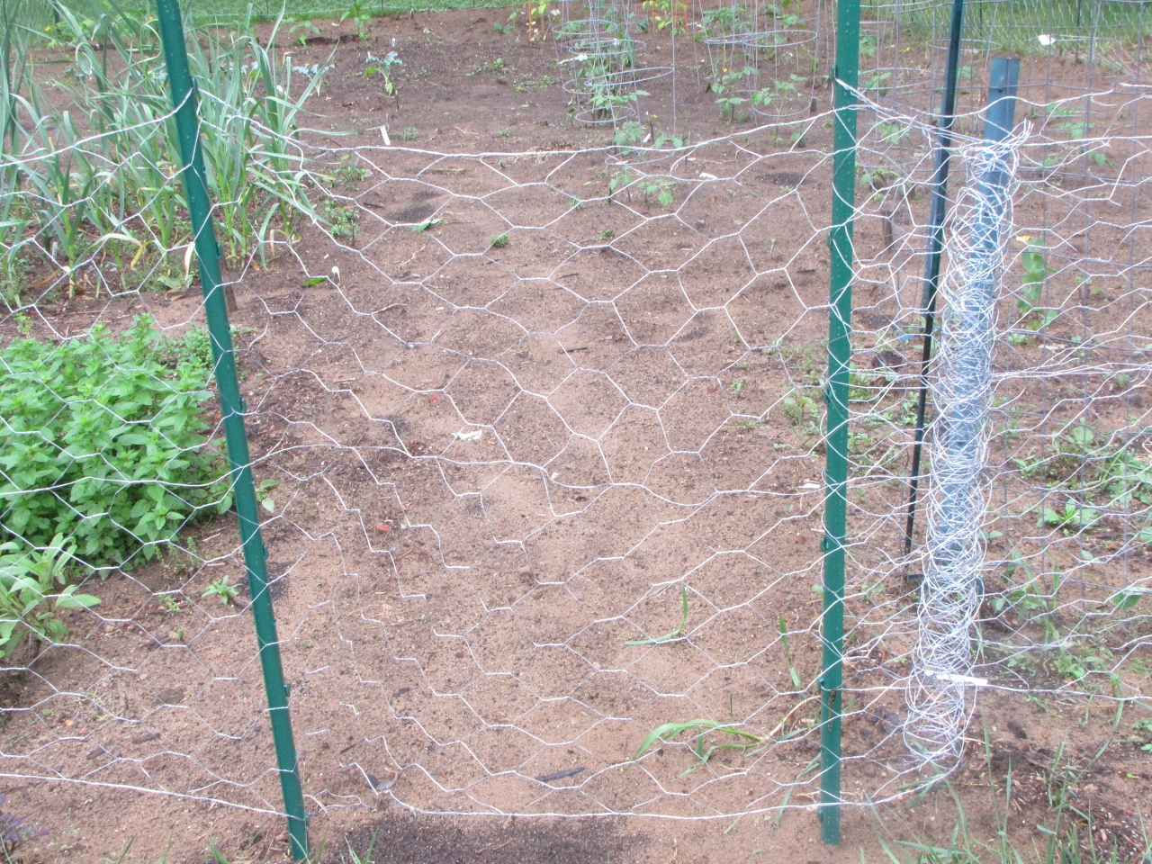 Picture of: Chicken Wire But No Chickens Aka Our Garden Plan Kimversations