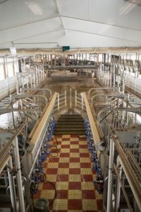 Cornell's dairy barn is designed to maintain optimal temperature for the cows.