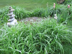 Looks like I should divide my day lilies. They're getting a little thick.