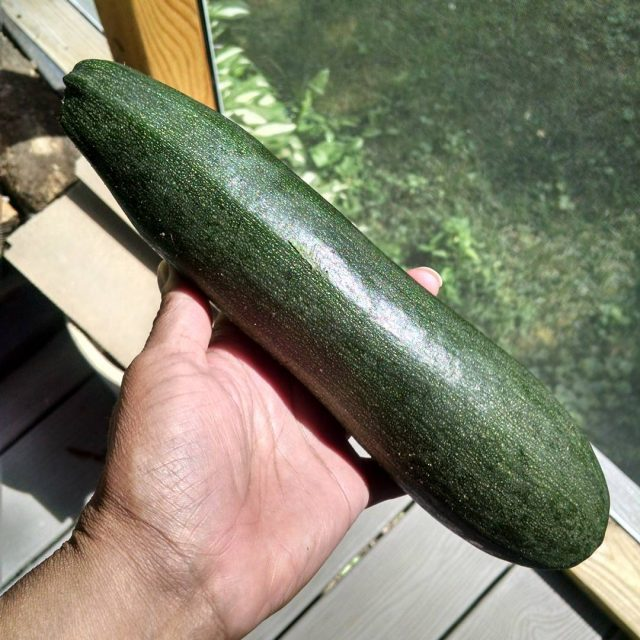 The excitement of picking the first zucchini of the seasonhellip
