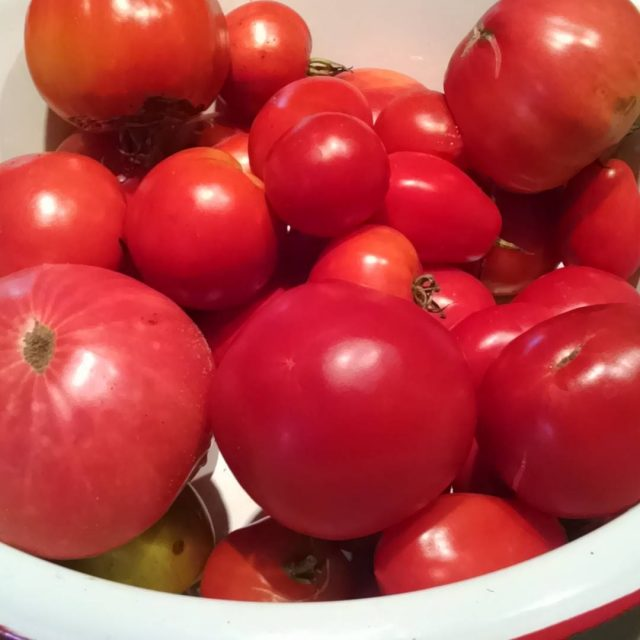 Best tomato year ever! Picked about 10 lbs yesterday andhellip